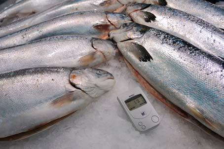 Сахалинскую рыбу продолжают проверять на радиацию