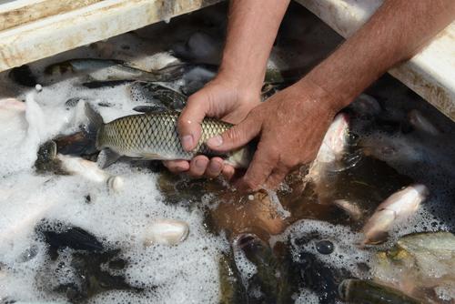 рыбалка на камнях в балаково