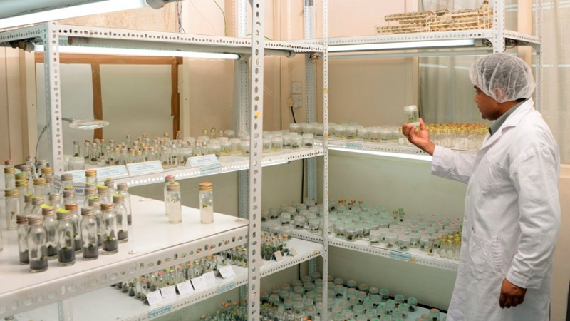 Научно-исследовательский институт чая Шри-Ланки